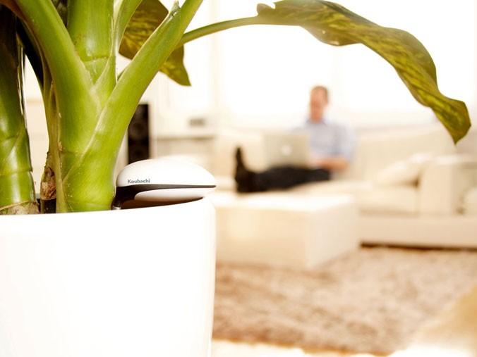 Koubachi Wifi Plant Sensor